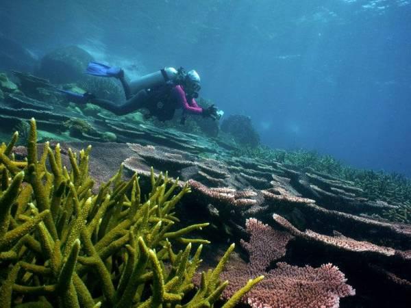 Pulau Di Malaysia - Pulau Aur